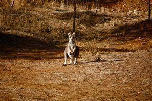 Najem vozila Tamworth, Avstralija