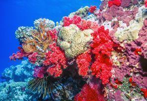 Najem vozila Coral Coast, Fidži